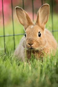 Pet rabbit feeding on fresh grass